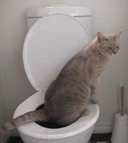 cat_toilet